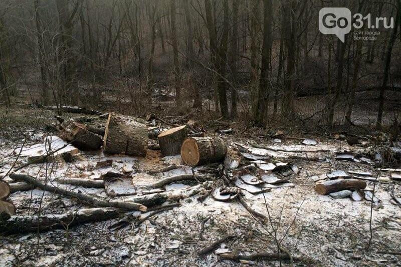 Жители Белгорода обеспокоены вырубкой деревьев в Архиерейской роще