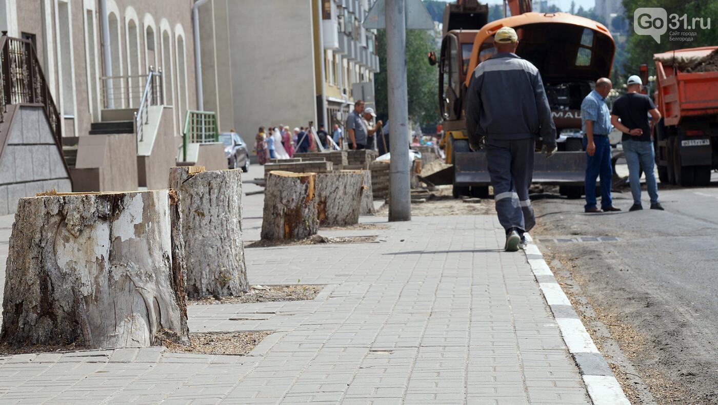 Власти Белгорода будут советоваться с горожанами перед вырубкой деревьев, фото-8, Фото: Сергей Егоров