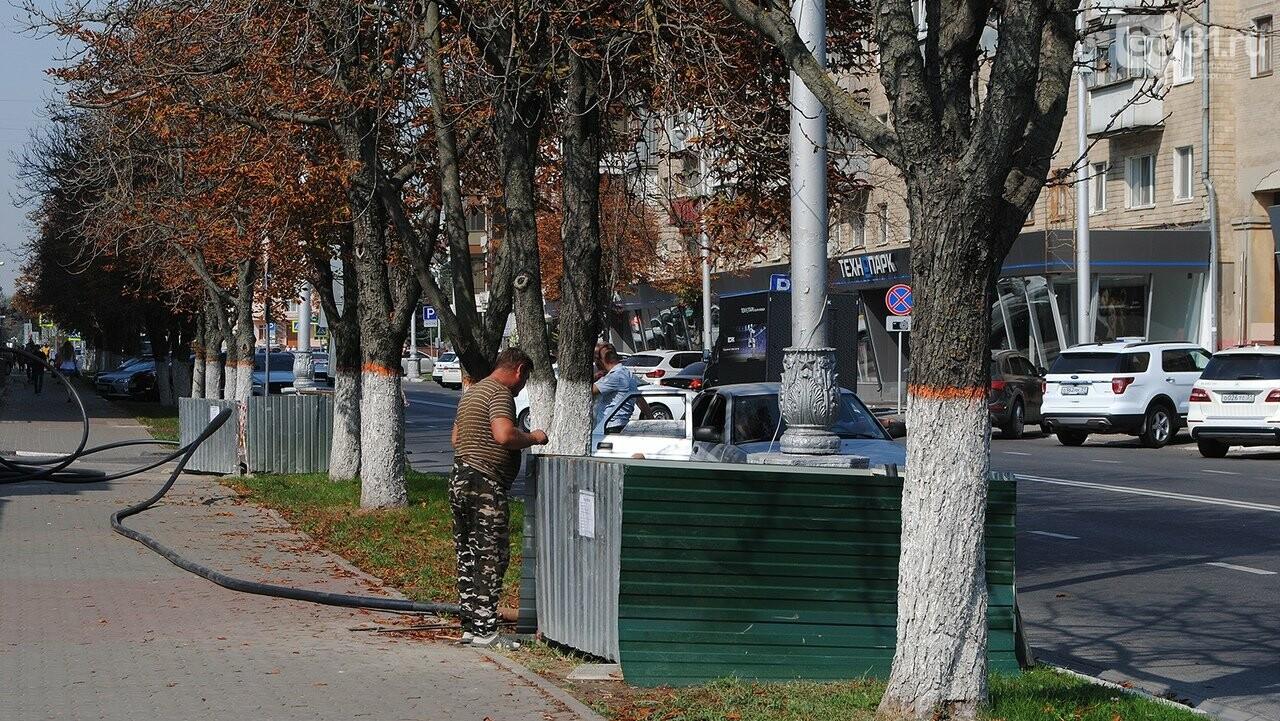 В Белгороде вырубают заражённые молью каштаны, фото-3