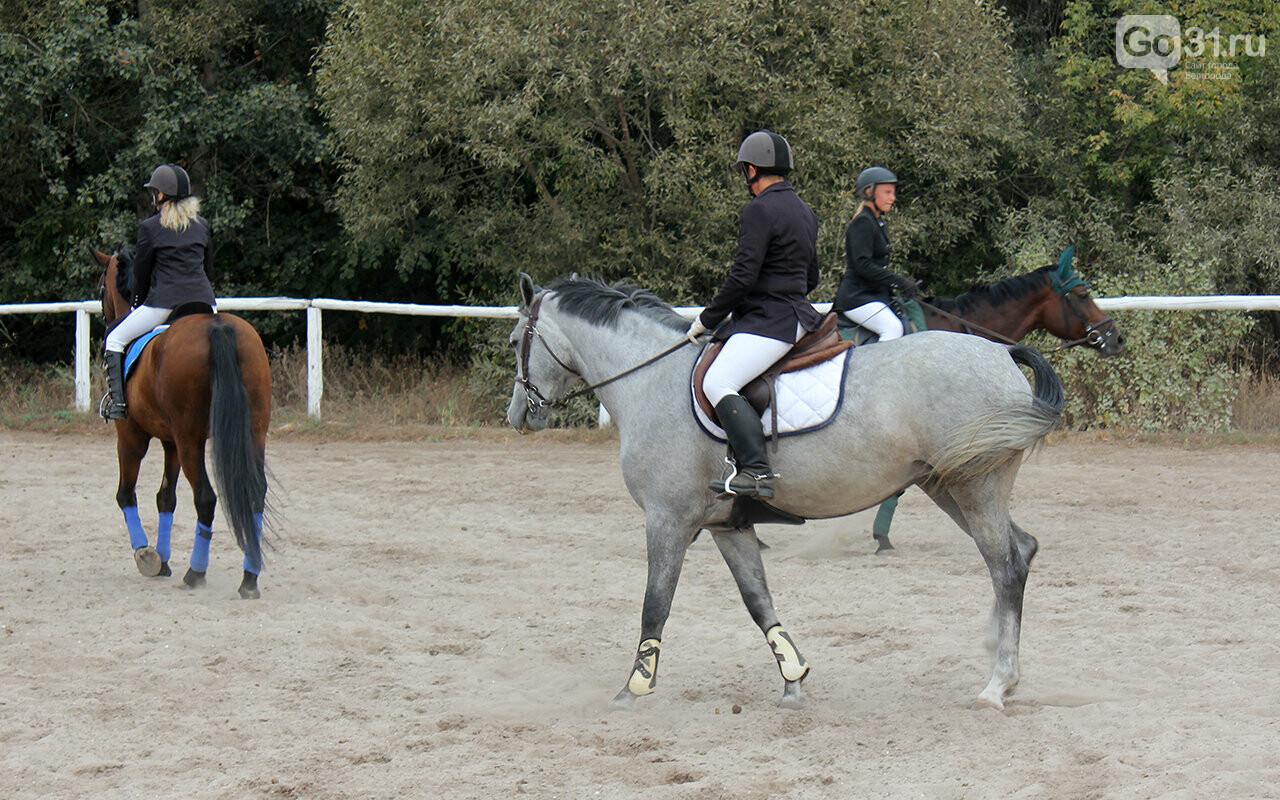В Белгороде за Кубок губернатора по конному спорту борются 12 команд, фото-4