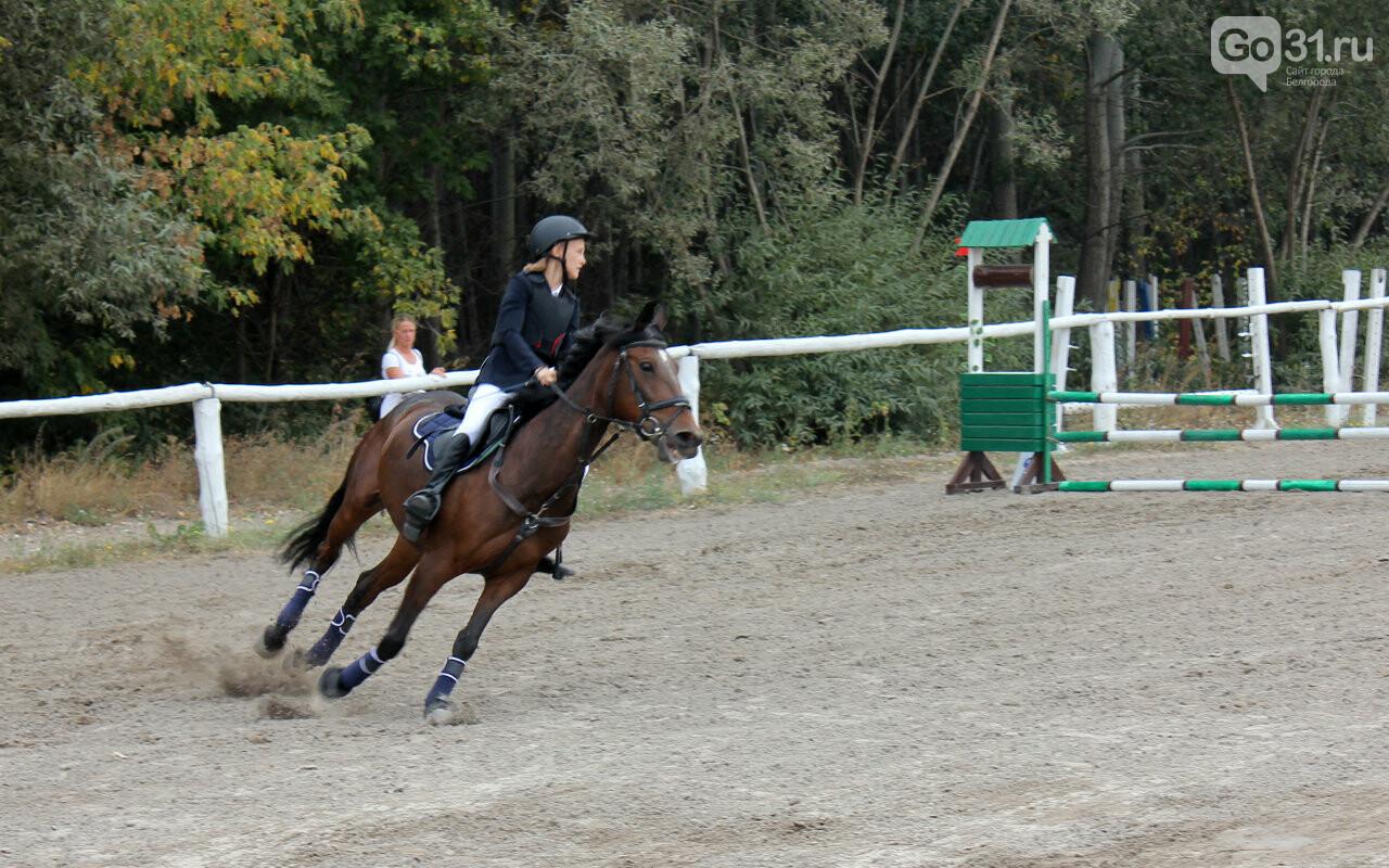 В Белгороде за Кубок губернатора по конному спорту борются 12 команд, фото-8