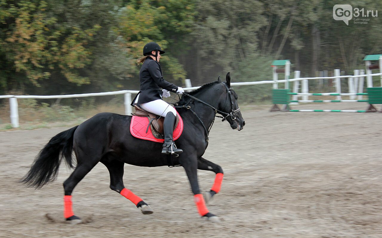 В Белгороде за Кубок губернатора по конному спорту борются 12 команд, фото-12