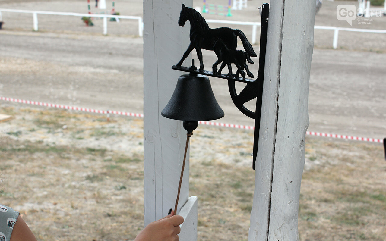 В Белгороде за Кубок губернатора по конному спорту борются 12 команд, фото-14