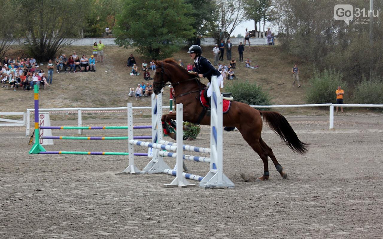 В Белгороде за Кубок губернатора по конному спорту борются 12 команд, фото-18
