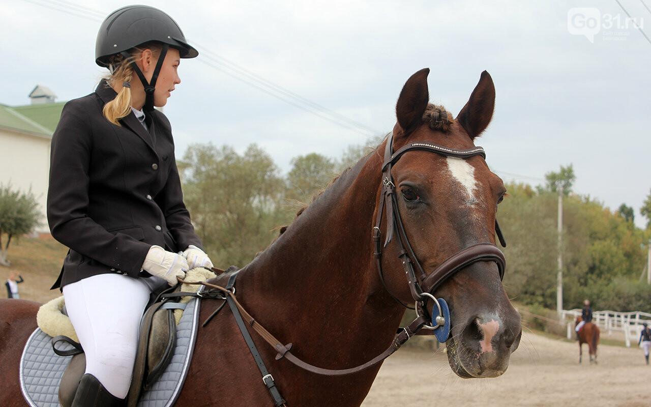 В Белгороде за Кубок губернатора по конному спорту борются 12 команд, фото-22