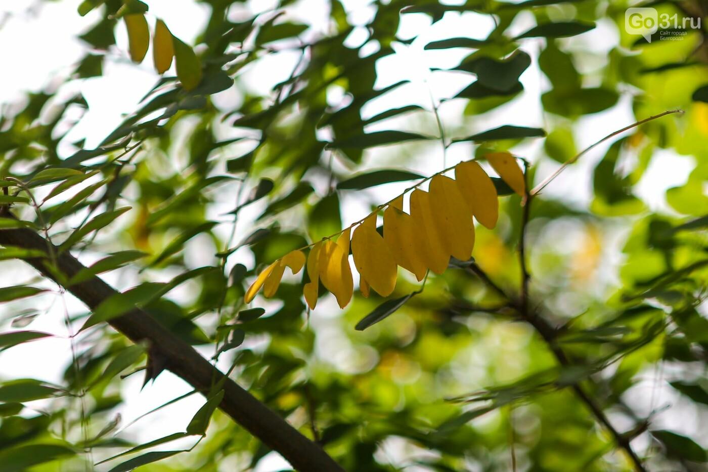 Счёт осени. Белгород желтеет к концу сентября, фото-9