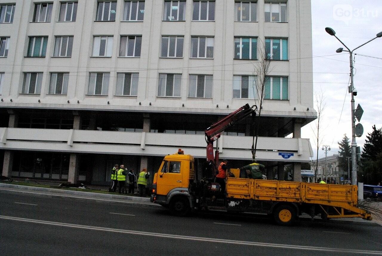 В Белгороде на Попова высаживают новые липы, фото-9