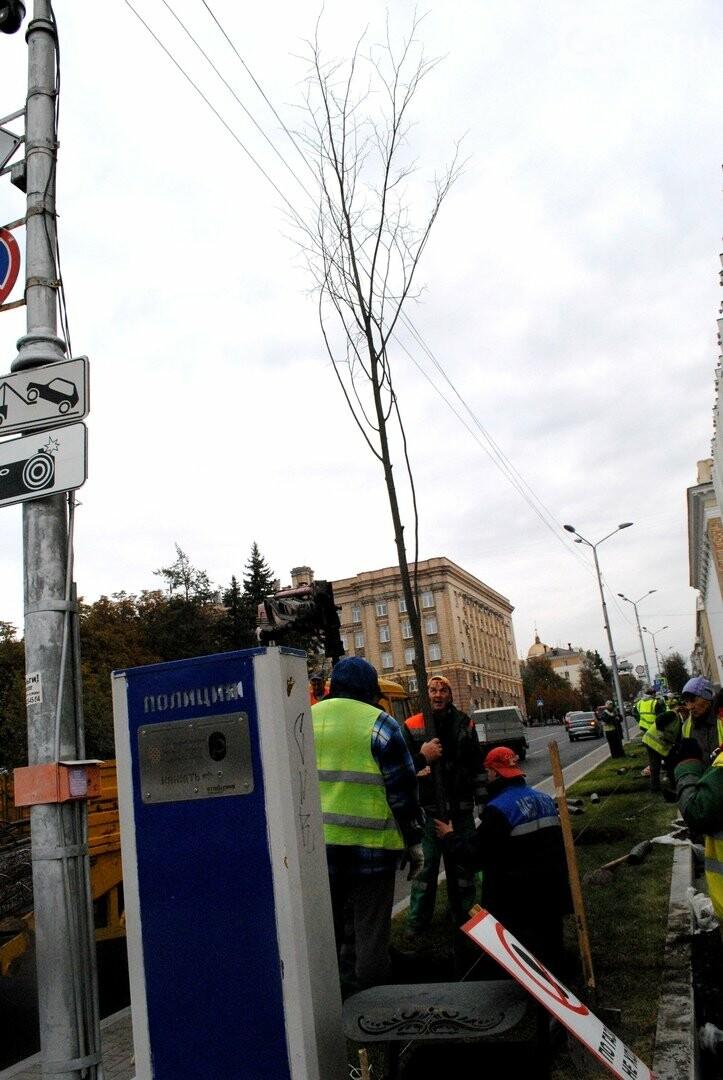 В Белгороде на Попова высаживают новые липы, фото-7