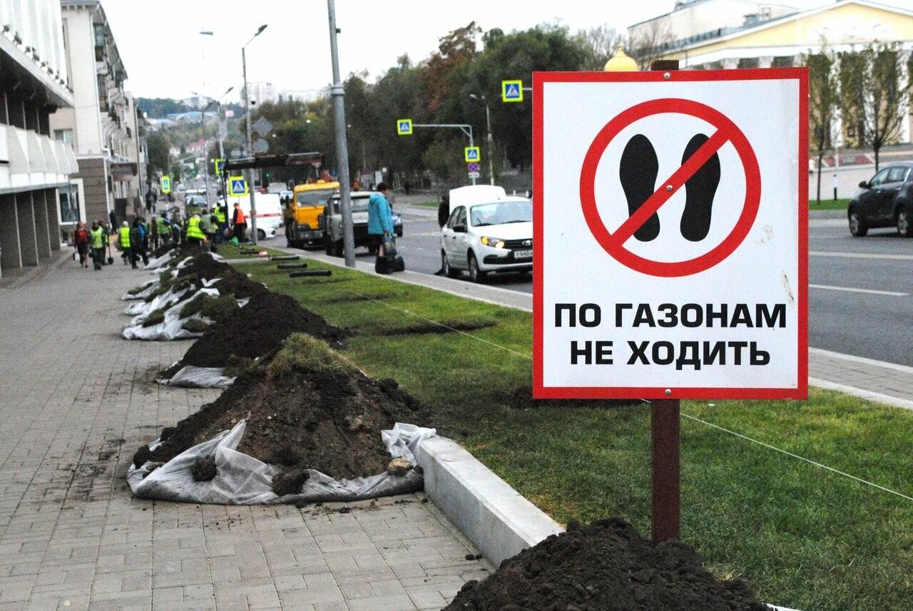 В Белгороде на Попова высаживают новые липы, фото-5