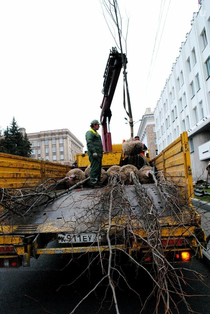 В Белгороде на Попова высаживают новые липы, фото-6