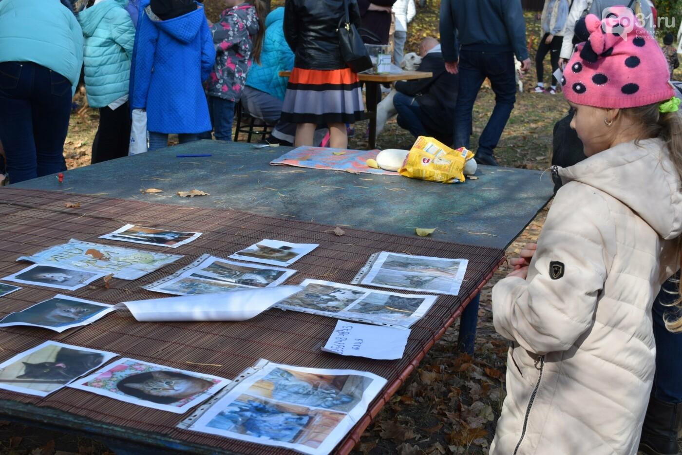 «Пойдём домой!»: в Белгороде 28 бездомных собак обрели хозяев, фото-18