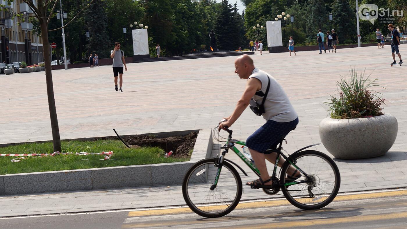 Илья Варламов: Проблема Белгорода – в «сексуальных» велодорожках, фото-2