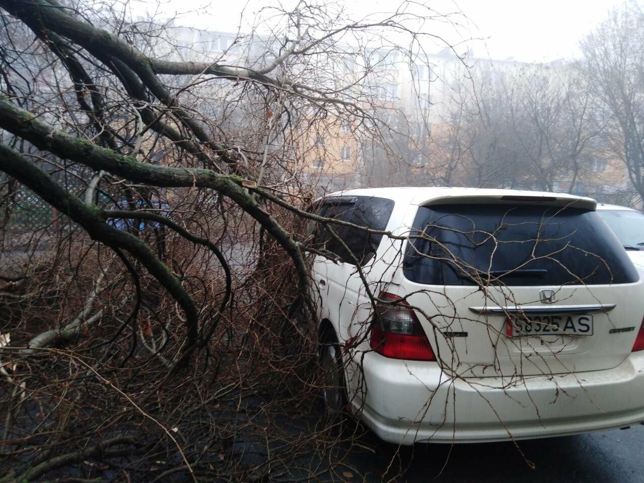 В центре Строителя во дворе многоэтажки на машины упало дерево, фото-3, Фото: Татьяна Лазарева