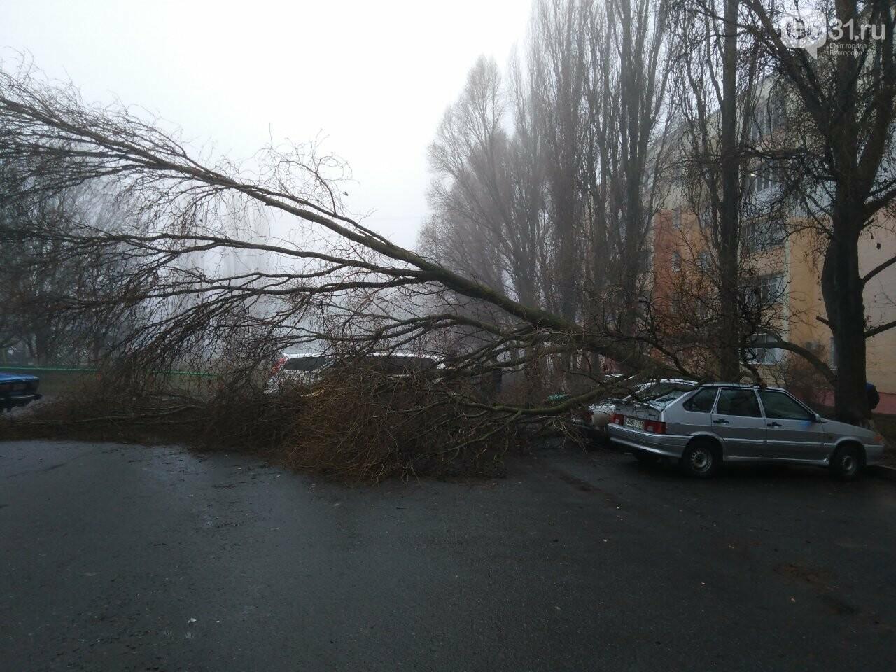 В центре Строителя во дворе многоэтажки на машины упало дерево, фото-4, Фото: Татьяна Лазарева