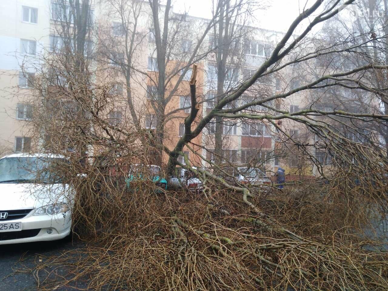 В центре Строителя во дворе многоэтажки на машины упало дерево, фото-1, Фото: Татьяна Лазарева
