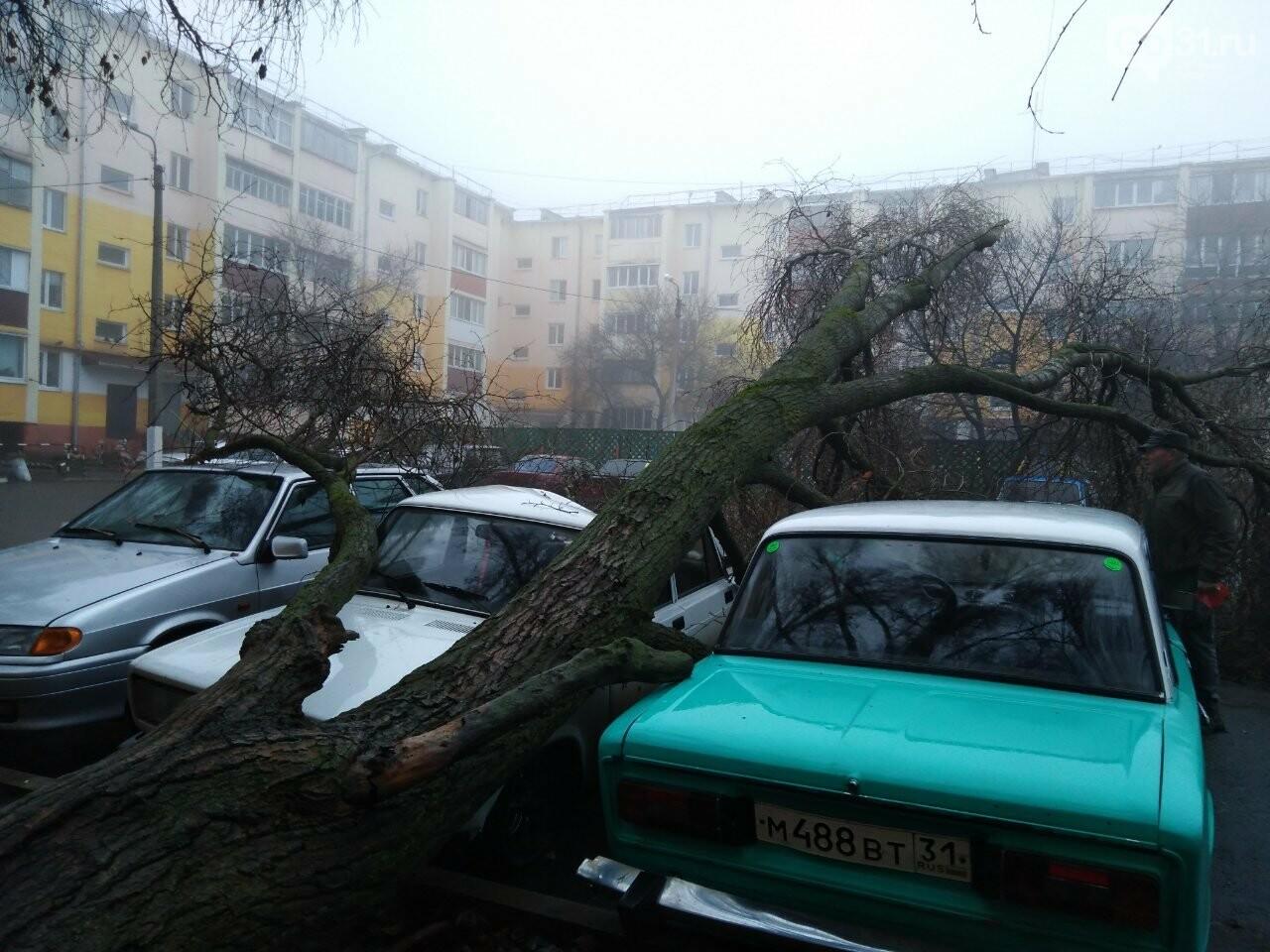 В центре Строителя во дворе многоэтажки на машины упало дерево, фото-5, Фото: Татьяна Лазарева