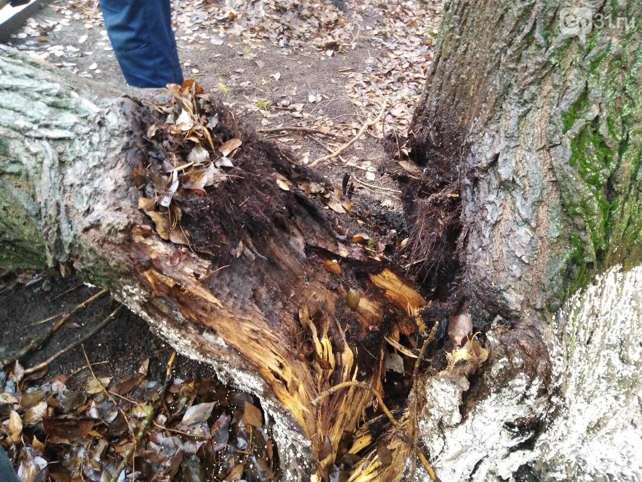В центре Строителя во дворе многоэтажки на машины упало дерево, фото-2, Фото: Татьяна Лазарева