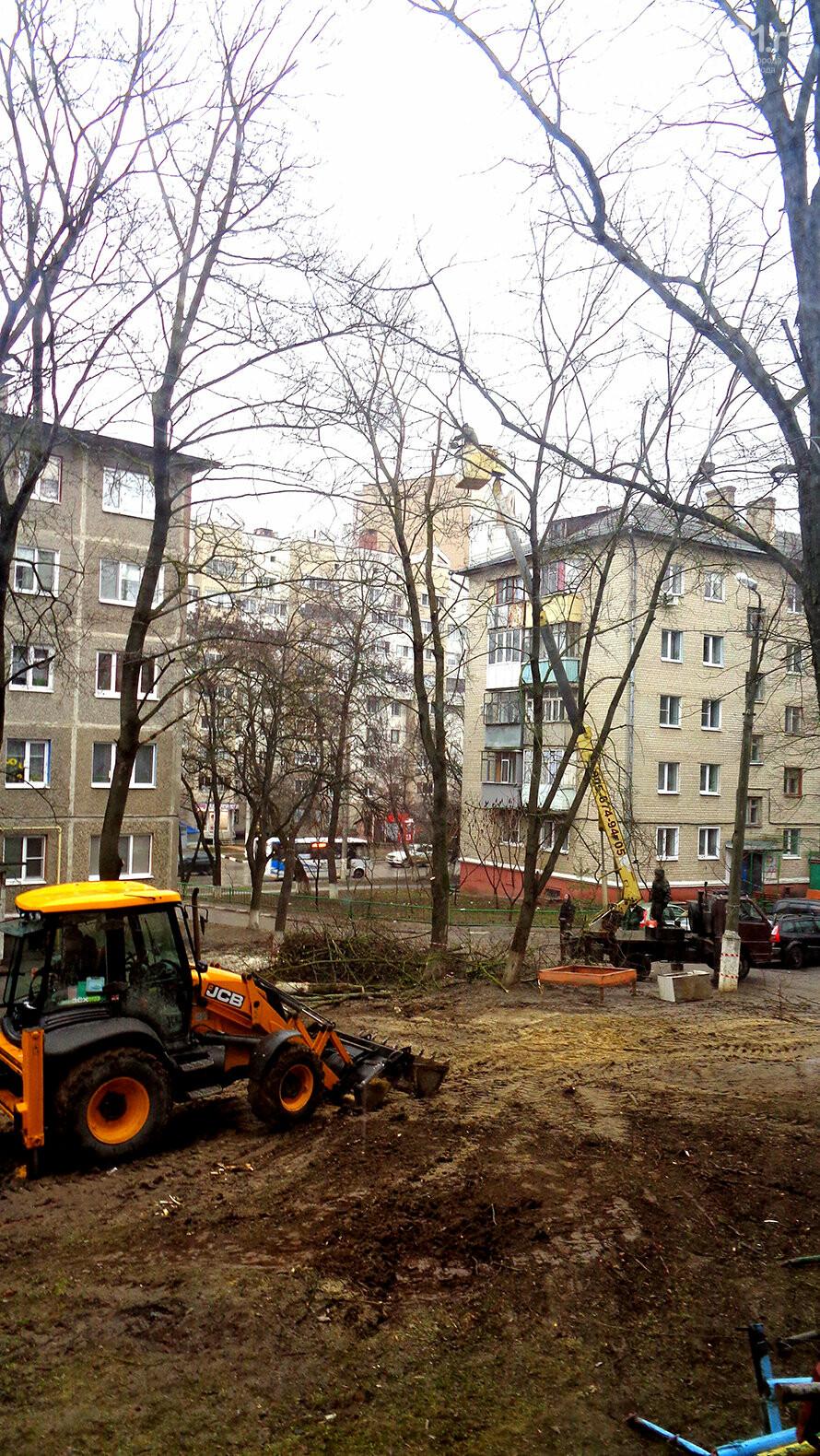 Жители Белгорода возмущены вырубкой деревьев во дворе многоэтажки, фото-2