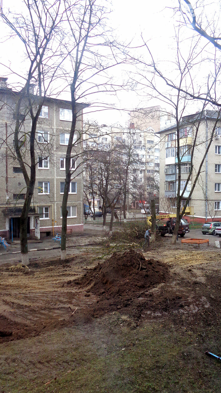 Жители Белгорода возмущены вырубкой деревьев во дворе многоэтажки, фото-3
