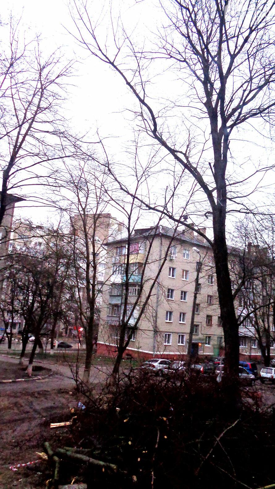 Они были больными. В мэрии Белгорода прокомментировали вырубку деревьев во дворе пятиэтажки, фото-1