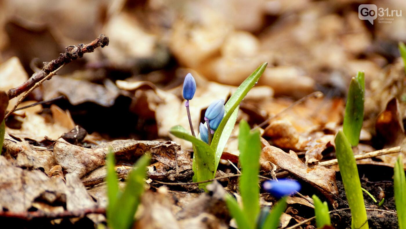 Кого и что можно встретить в лесу Маршалково в Строителе, фото-4
