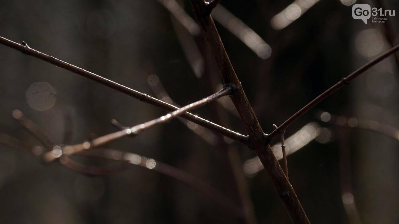 Кого и что можно встретить в лесу Маршалково в Строителе, фото-9