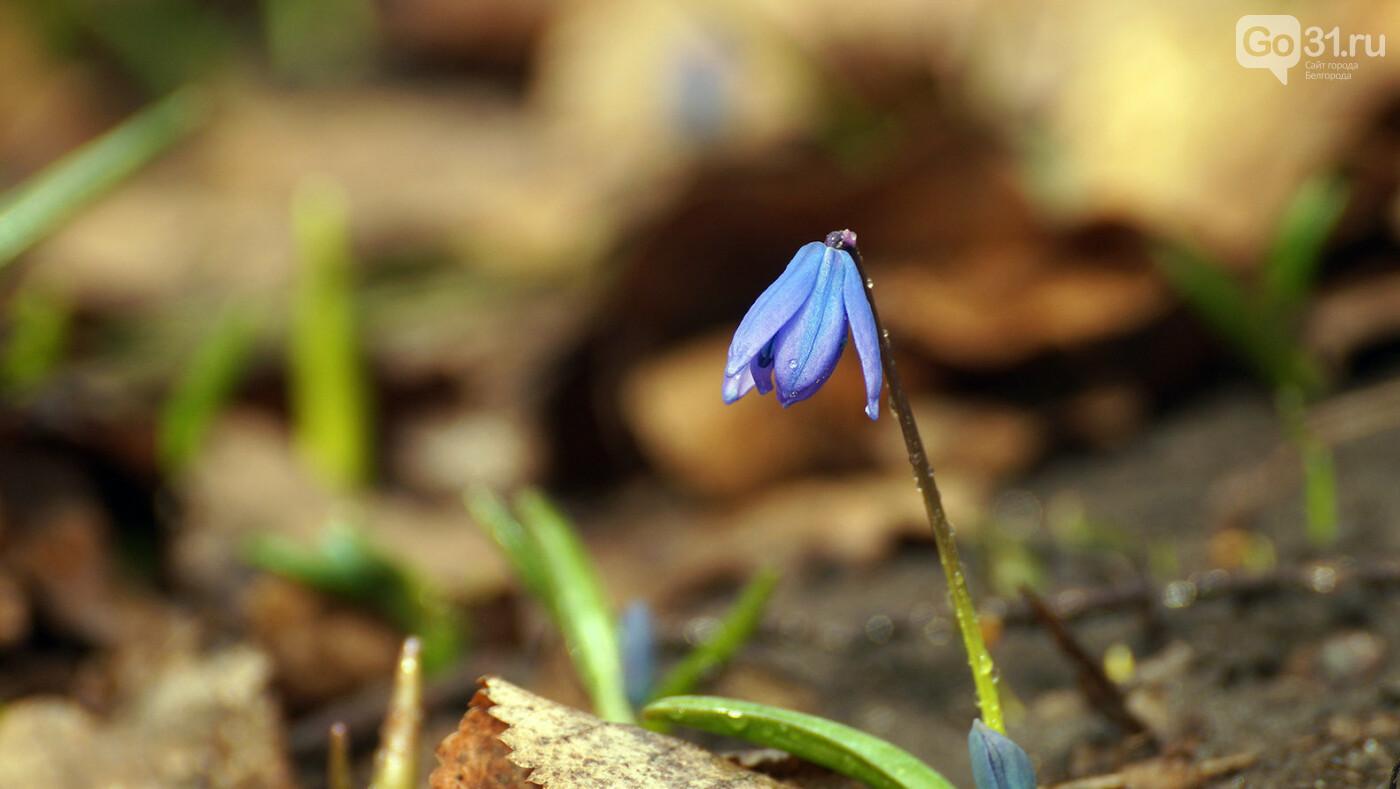 Кого и что можно встретить в лесу Маршалково в Строителе, фото-10