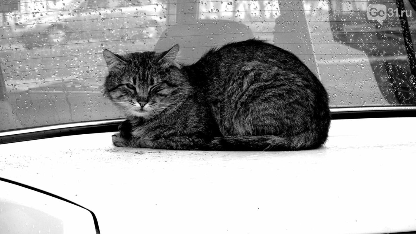 Карантинные хроники. «А можно мне своего кота утилизировать?», фото-1