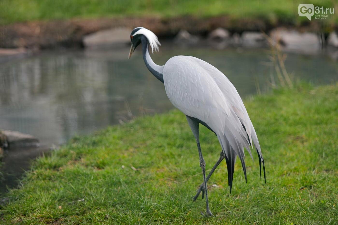 Фламинго, тамарины, антилопа. Кто ещё поселится в зоопарке Белгорода, фото-31