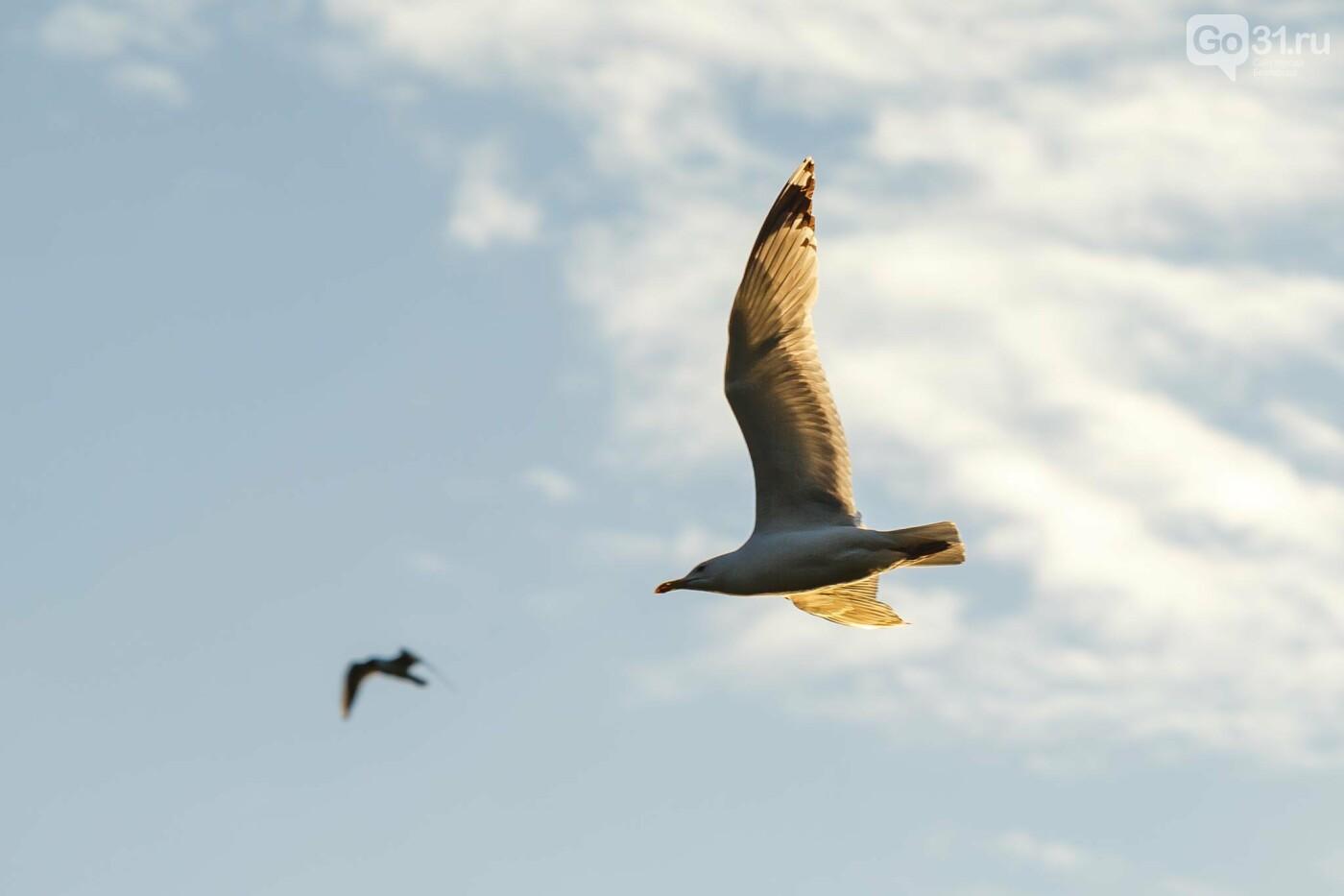 Пролетая над озером. В Белгороде чайки выбрали удобное место обитания, фото-10, Фото: Антон Вергун