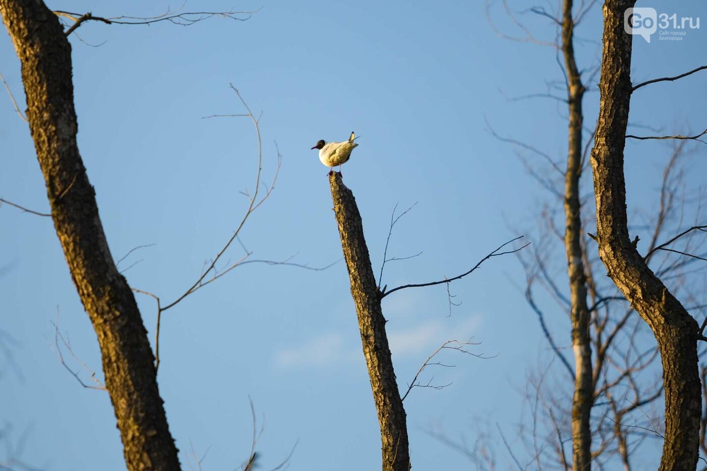 Пролетая над озером. В Белгороде чайки выбрали удобное место обитания, фото-15, Фото: Антон Вергун