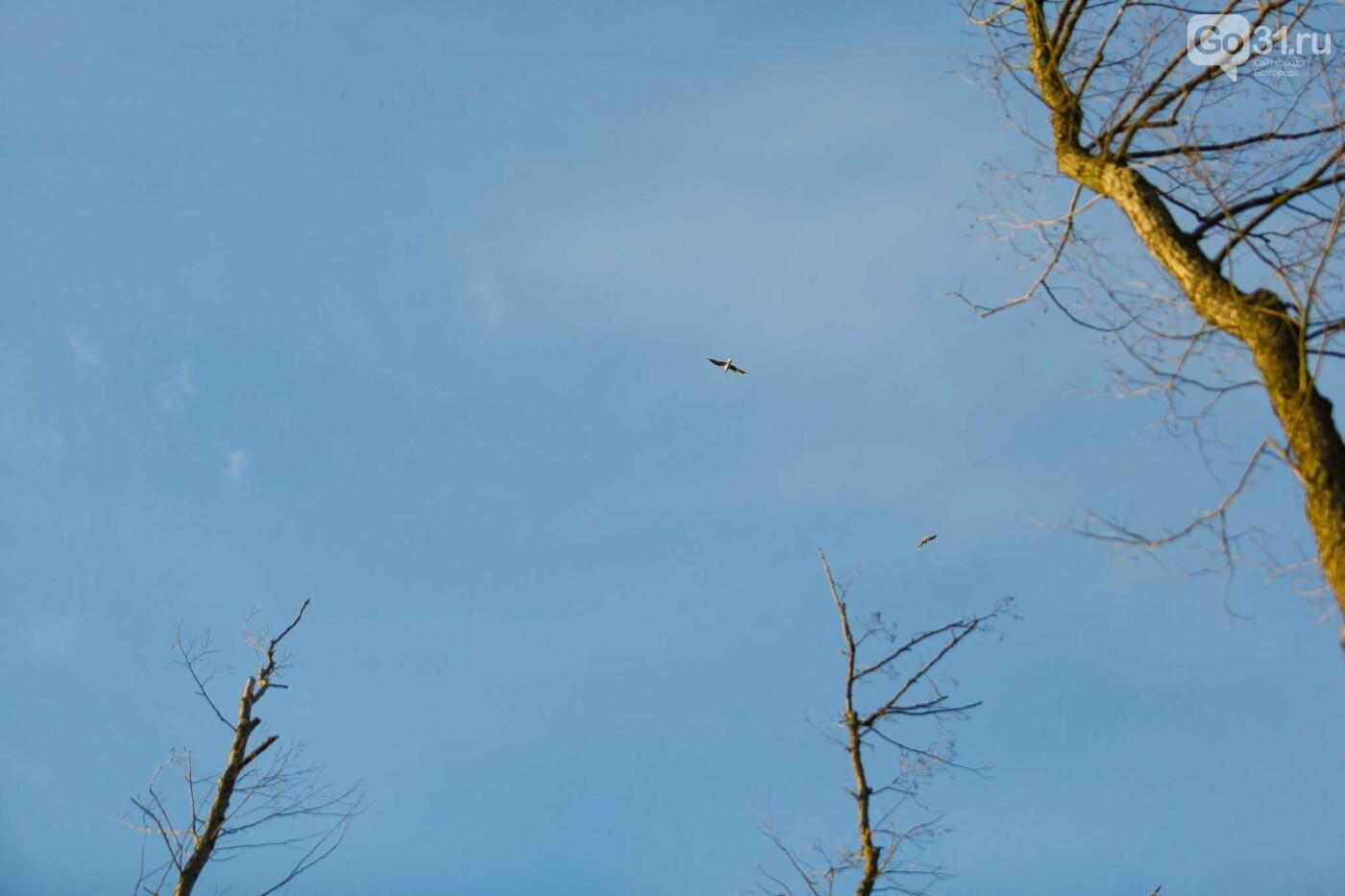 Пролетая над озером. В Белгороде чайки выбрали удобное место обитания, фото-16, Фото: Антон Вергун