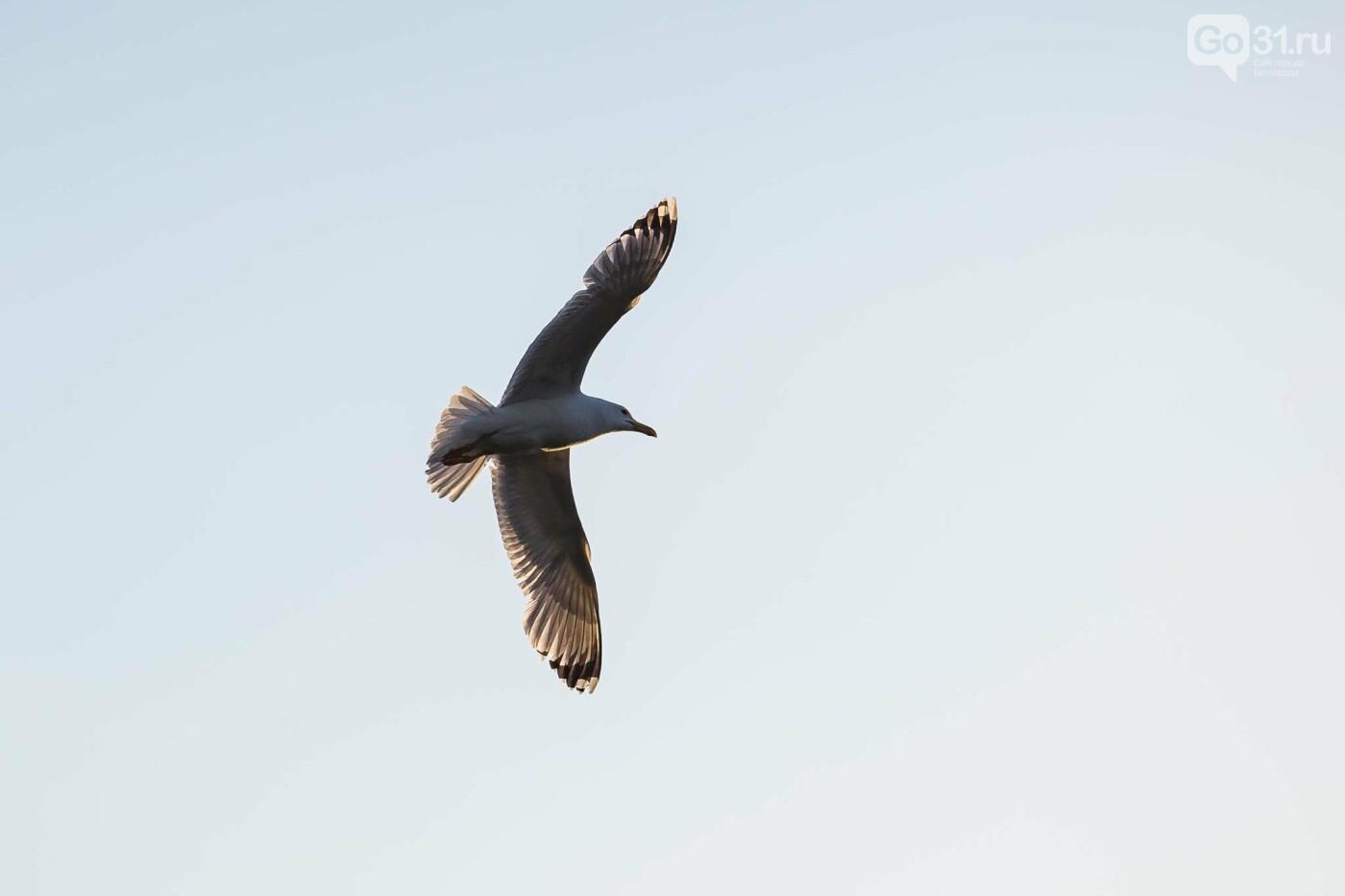 Пролетая над озером. В Белгороде чайки выбрали удобное место обитания, фото-19, Фото: Антон Вергун