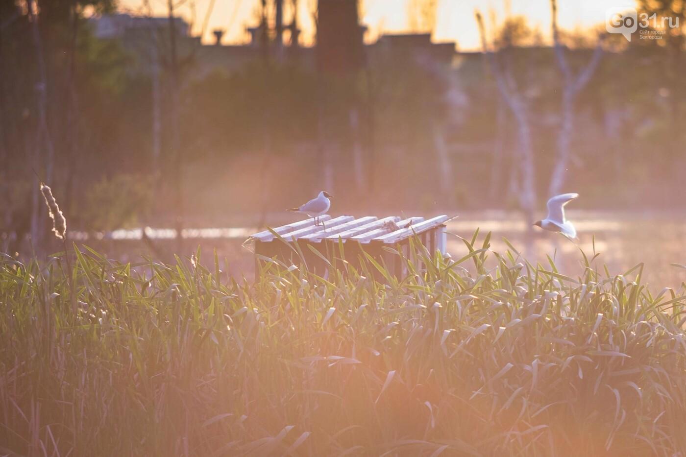 Пролетая над озером. В Белгороде чайки выбрали удобное место обитания, фото-21, Фото: Антон Вергун