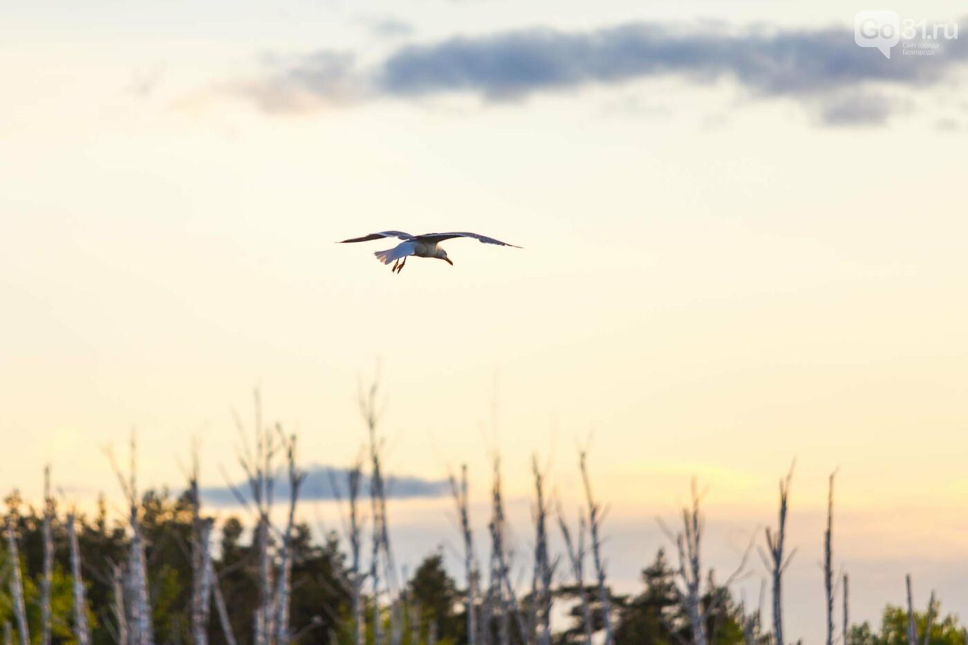Пролетая над озером. В Белгороде чайки выбрали удобное место обитания, фото-23, Фото: Антон Вергун