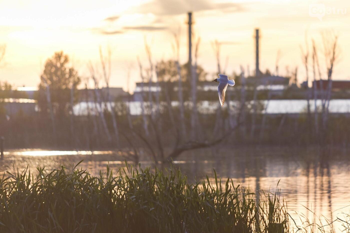 Пролетая над озером. В Белгороде чайки выбрали удобное место обитания, фото-29, Фото: Антон Вергун