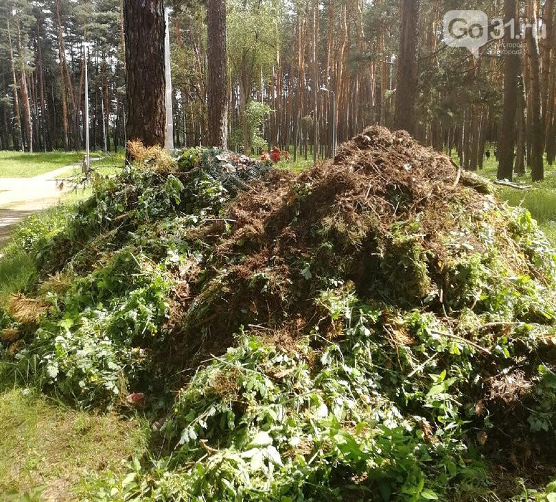 Можем повторить? Как в Белгородской области за военными кладбищами ухаживают, фото-11