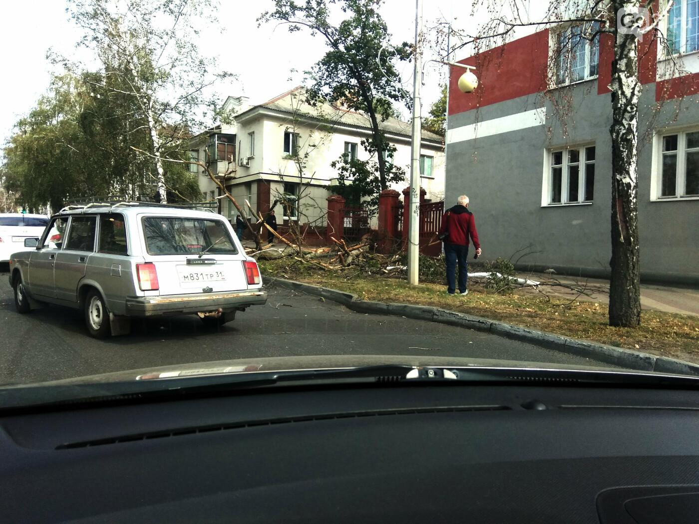 В центре Белгорода упавшее дерево едва не зацепило машины, фото-4, Фото: Оксана Булгакова