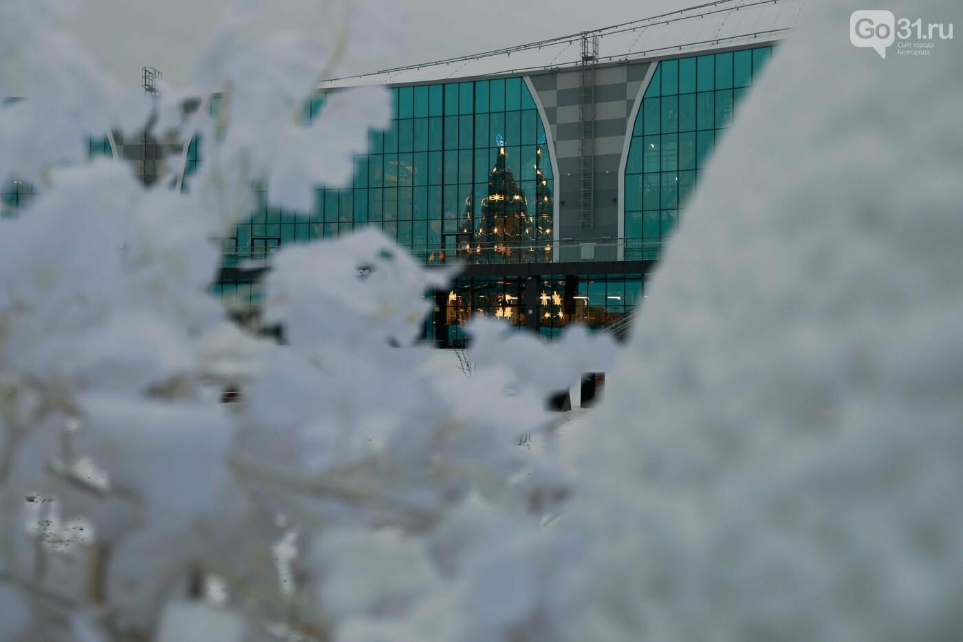 Ёлка у белгородского аквапарка, Фото: Антон Вергун