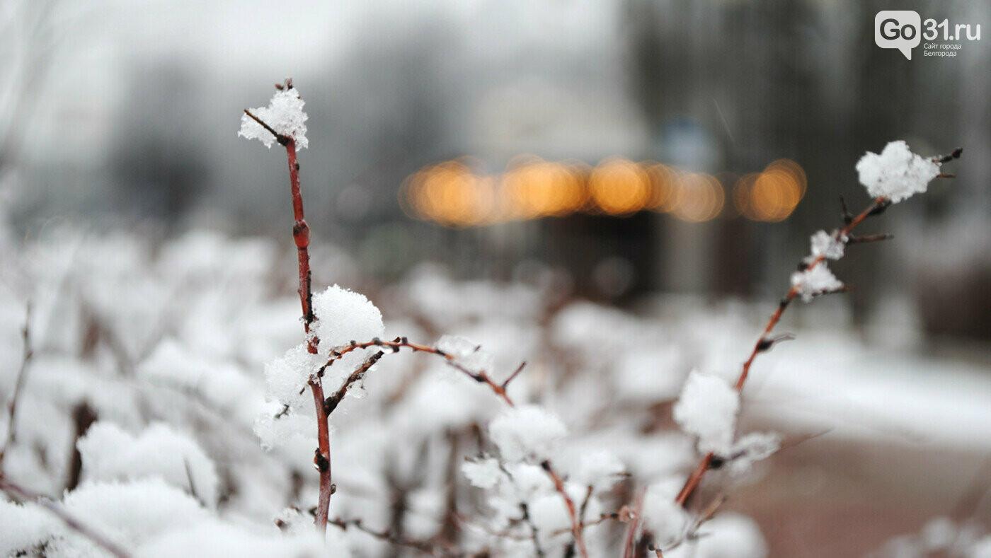 Выпавший снег в Белгороде, Фото: Сергей Егоров