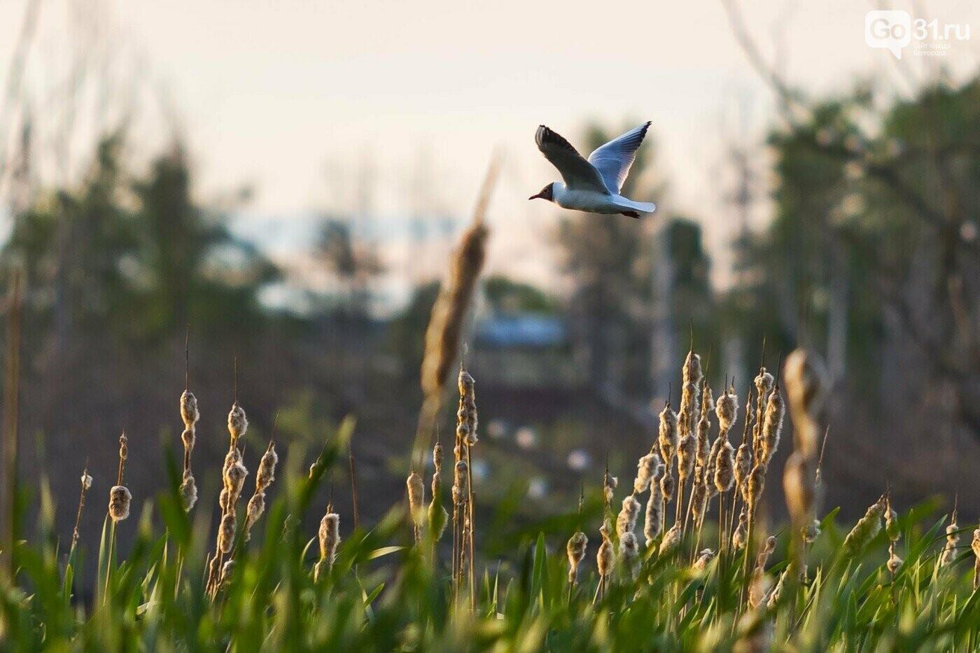 Полёт чайки над озером в Белгороде, Фото: Антон Вергун