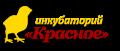 Инкубаторий Красное_Белгород