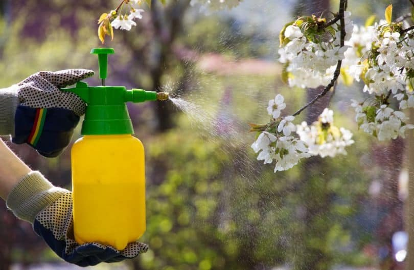 Опрыскивание плодовых деревьев и кустарников!, фото-1