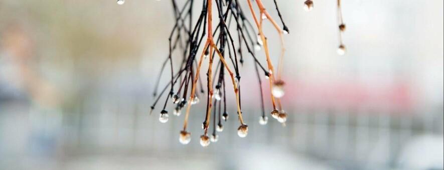 В новогоднюю ночь белгородцев ждёт дождь