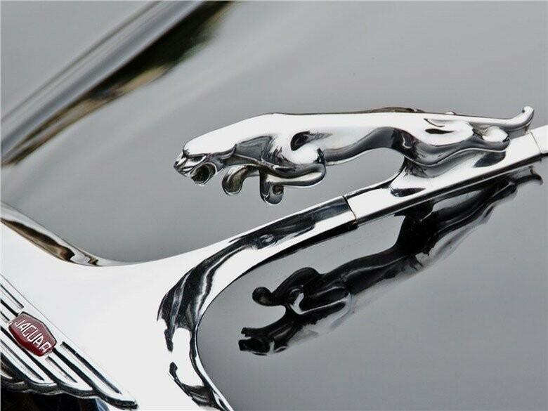один фото символов ягуара отличается женская