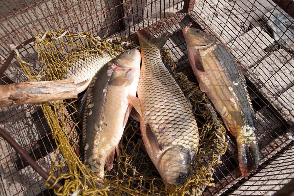 Яковлевские «Ключики» о рыбе, как она есть, фото-1
