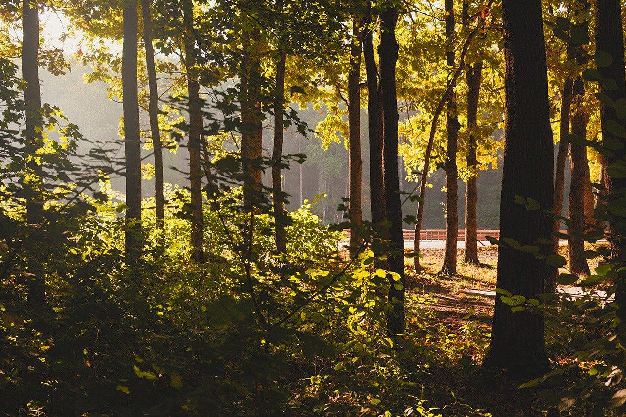 Осенние листья летят, фото-2