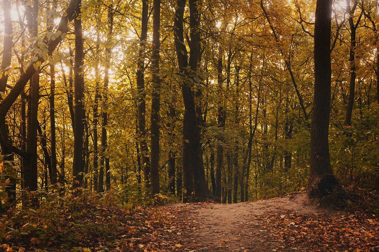 Осенние листья летят, фото-3