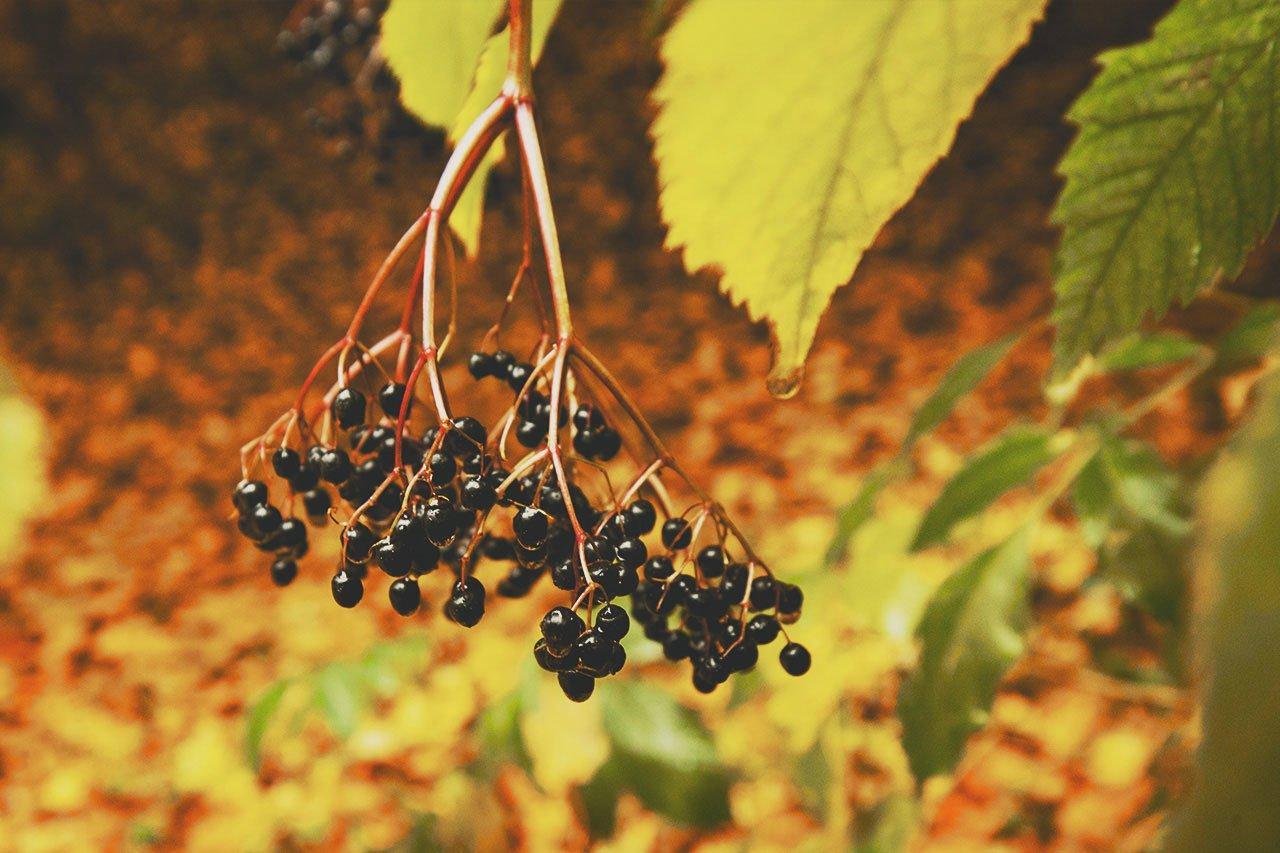 Осенние листья летят, фото-5