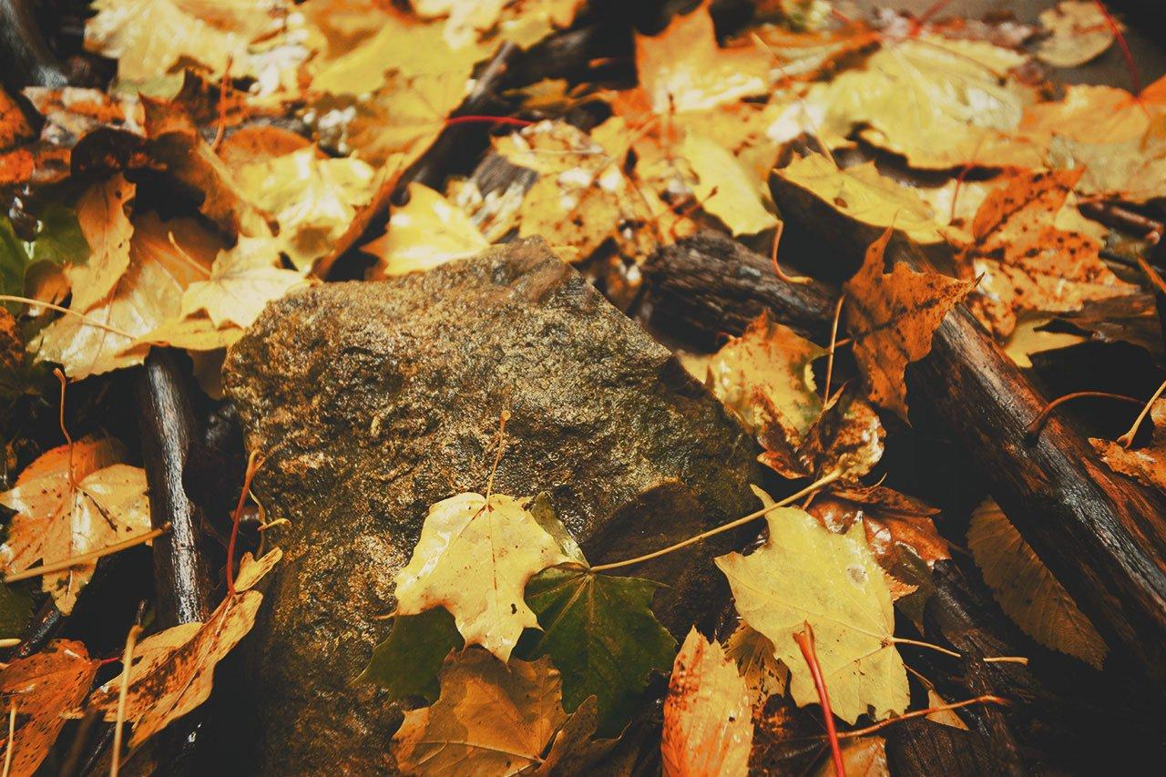 Осенние листья летят, фото-7